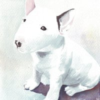 Original watercolor painting puppy bull terrier dog art white black