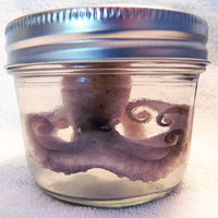 Real Preserved Baby Octopus in a Jar -  Wet Specimen