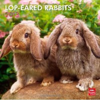 Lop-Eared Rabbits 2013 Square 12X12 Wall Calendar (Multilingual Edition): BrownTrout Publishers: 9781421699301: Amazon.com: Books