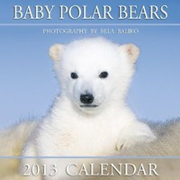 Baby Polar Bears 2013 Calendar: Bela Baliko Photography & Publishing: 9781897574928: Amazon.com: Books