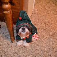 Elf Dog Christmas/Holiday Costume