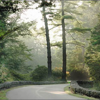 Visit Biltmore - Gardens - Approach Road