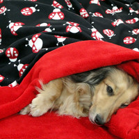 LadyBug Love - Snuggle Sack - for Dogs - Pets - Includes Embroidered Personalization - Small