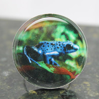 Frog Photo Ring Dendrobates Azureus Poison Dart Frog Original Photography