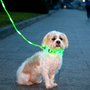 Litey Leash: Light Up The Night