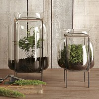 Glass Terrariums