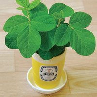 Edamame Growing Kit | Ceramic Beer Glass Growing Kit | fredflare.com