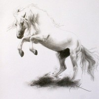 Horse Art black and white pencil drawing original spansih lusitano