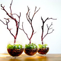 Modern Globe Manzanita Forest Moss Terrarium by TinyTerrains