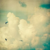 Birds Among the Clouds Fine Art Photograph by EyePoetryPhotography