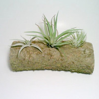 Air Plant Holder, Yule Log, Rustic Air Plant Holder, Tillandsia Container, Yule Log ONLY