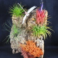 Air Plants and Dragonfly on Hanging Cork by TheLivingArt