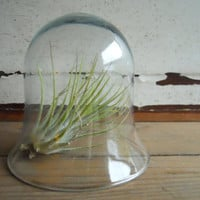 Bell Jar Cloche FREE SHIPPING by sesameandsparrow on Etsy