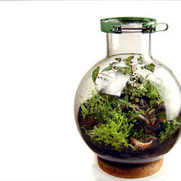20 liter biodome by MacNettlesDesign on Etsy