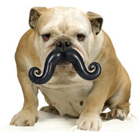 humunga stache, ball and mustache all at once, for the dogs