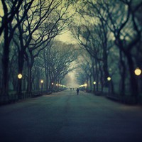Central Park, New York City Photograph, Trees, Fog, Color Photography, Twilight, Mysterious, Denim Blue - The Music of Chance