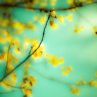 Canary yellow tree photography aqua pastel tones pale by bomobob