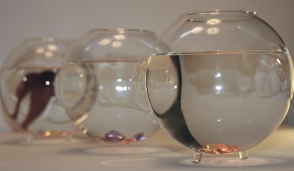 Unique fish bowls from opulent items for Cool fish bowls