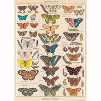 (20x28) Natural History Butterflies Decorative Decoupage Vintage Style Paper Poster Print