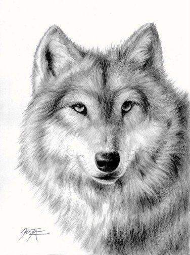 Wolf, pencil drawing limited edition from 2ndMoon on Etsy