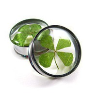 Real 4 Leaf Clover Embedded Plugs gauges  by mysticmetalsorganics