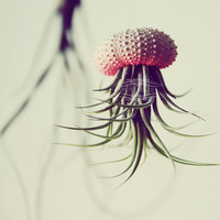 3 OMBRE Jellyfish Air Plant // Hot Pink // Sea Urchin Wedding Favor Decor Gift gradient neon color fade flourescent shell hanging art
