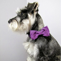 Purple Sparkles Bow Tie Adjustable Collar by playfulpup on Etsy