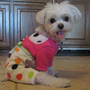 Fleece Pajamas for Small Dogs Pink Dots with by LittleDogFashion