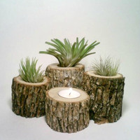 Air Plant Holder, Rustic Wedding Centerpiece, Log Candle Holders, FOUR, Oak Candle Holders