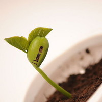 grow a message beanstalk seeds by beecycle | notonthehighstreet.com
