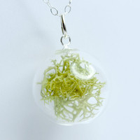 Green dried natural moss in clear hand blown glass by thestudio8