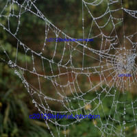 Jewel Dewdrop Spider  Web  Fine Art Photo on Canvas by BeadedDelightsByStef