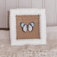 Butterfly Picture by LittleVintageCottage on Etsy