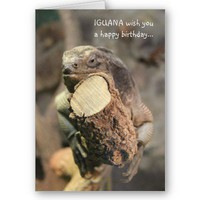 Funny Birthday Card, Iguana napping from Zazzle.com