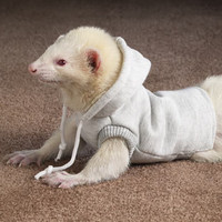 Clothing for Ferrets: Marshall Ferret Sweatshirt at Drs. Foster & Smith