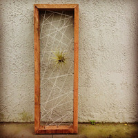 Valentines Gift Air plant personal Rustic by triple7recycled