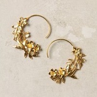 Agrippina Hoops - Anthropologie.com