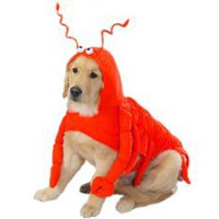 "Amazon.com: Casual Canine Lobster Paws Dog Costume, Medium (fits lengths up to 16""), Red-Orange: Pet Supplies"