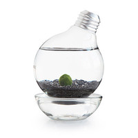 MARIMO MOSS BALL LIGHT BULB AQUARIUM