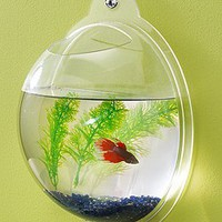 Wall Mount Fish Bowl Aquarium Tank Beta Goldfish: Pet Supplies