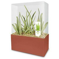 ThinkGeek :: Grow Your Own Aloe