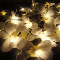 35 Globes White Frangipani Fairy Lights String 3.5M