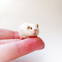Miniature guinea pig
