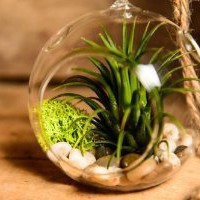 Amazon.com: Hinterland Trading Air Plant Tillandsia Bromeliads Kit with Pebbles and Moss Great Little Houseplant: Patio, Lawn & Garden
