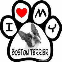 Imagine This 5-1/2-Inch by 5-1/2-Inch Car Magnet Picture Paw, Boston Terrier