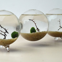 Marimo Terrarium - Japanese Moss Ball - Triple Aquarium - Home and Living - sea fan - sand