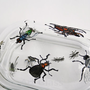 Hand Painted Glass Butter Dish Insects
