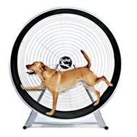 Gopet- Treadwheel For Large Dogs:Amazon:Pet Supplies