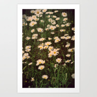 Summer daisy Art Print by  Alexia Miles photography