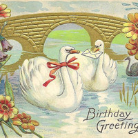 Pair of  Swans on Vintage Birthday Postcard 1909 Ashtabula Ohio cancel
